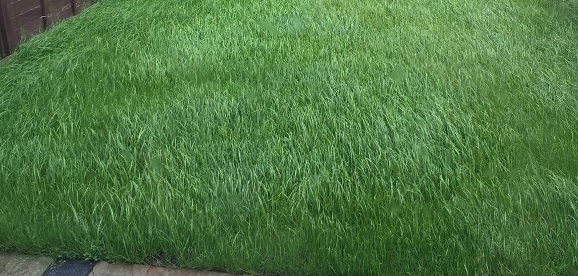 Lawn Turfing